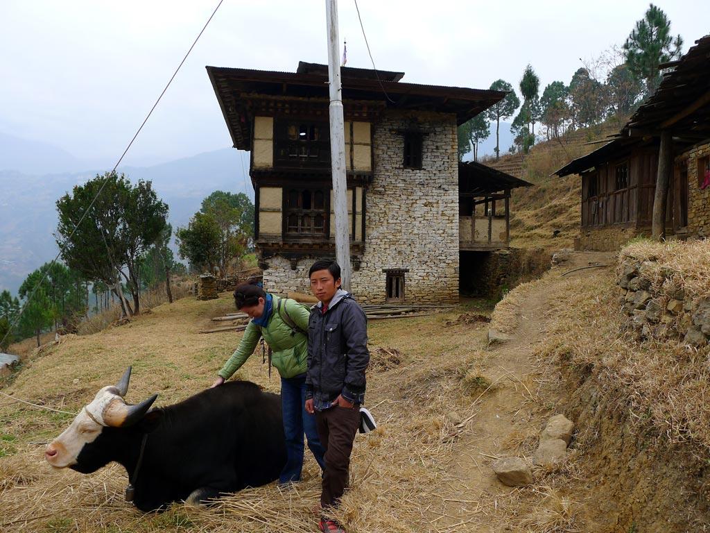 Asian ox zeb stuff..would