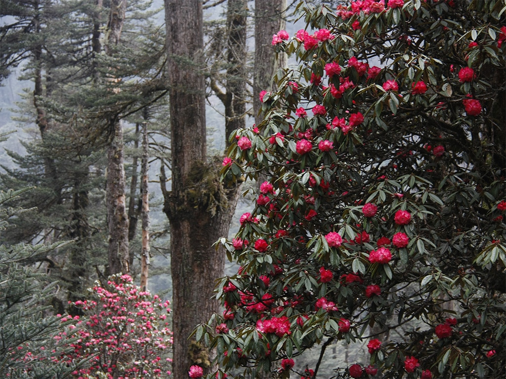 19 Days Forestry: West-Central – Bhutan Homestay
